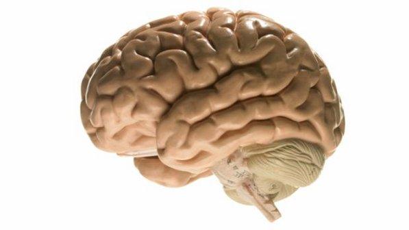 cerebro3-20121008-size-598